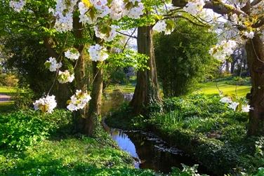 Colchester & Beth Chatto Gardens