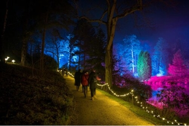 Dark evening, visitors on illuminated pathway, with trees and shrubs illuminated in bright colours
