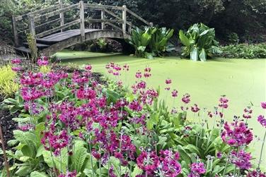 Hole Park Gardens Tour inc. Ploughman's Lunch