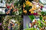 Kew Royal Botanic Gardens ~ Orchid Festival