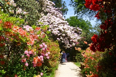 Pathway with colourful blooms on either side, a lady is standing at the far end of the pathway
