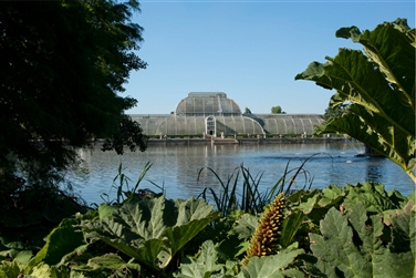 Kew's Palm House glass conservatory is in the distance with a lake and tropical plants to the front
