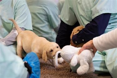 National Guide Dog Breeding Centre Tour