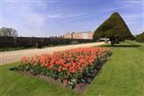 Hampton Court Palace & Tulip Festival