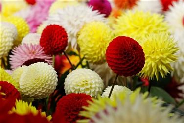 Gardens & Flower Shows