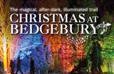 Christmas at Bedgebury Pinetum